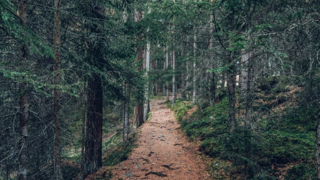 Trail Running Tips and Gear for Beginners
