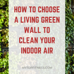 How to Choose a Living Green Wall to Clean Your Indoor Air